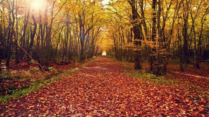 pathway_fall